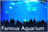 Monterey Famous Aquarium
