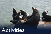 Monterey Tours - Activities