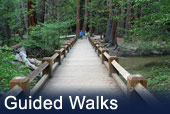 Yosemite National Park Guided Walks